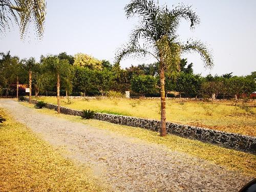 Terreno Venta en Real de Tezoyuca, Xochitepec Morelos