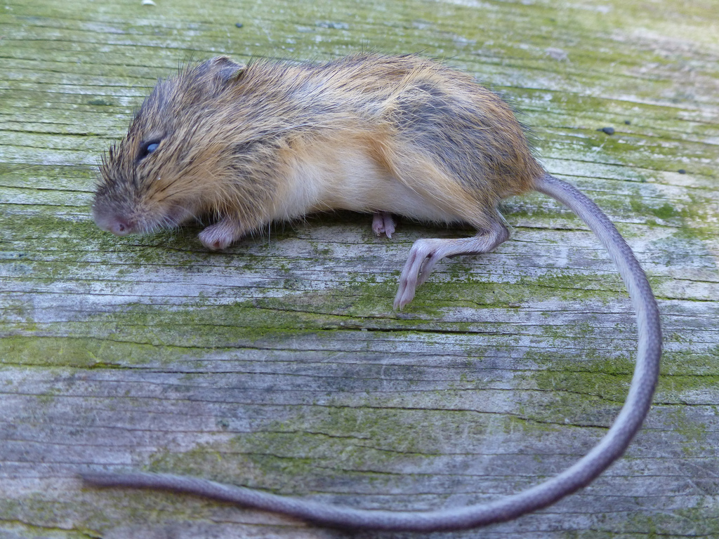 jumping mouse Jumping mouse on wn network delivers the latest videos and editable pages for news & events, including entertainment, music, sports, science and more, sign up and share your playlists.