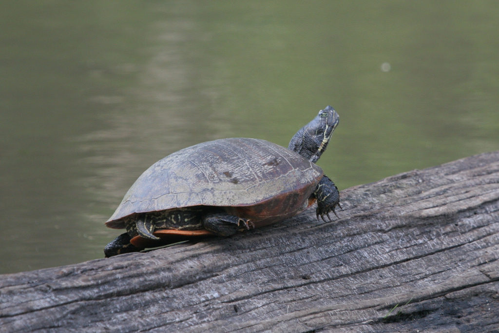 A Maryland Biodiversity Project Northern