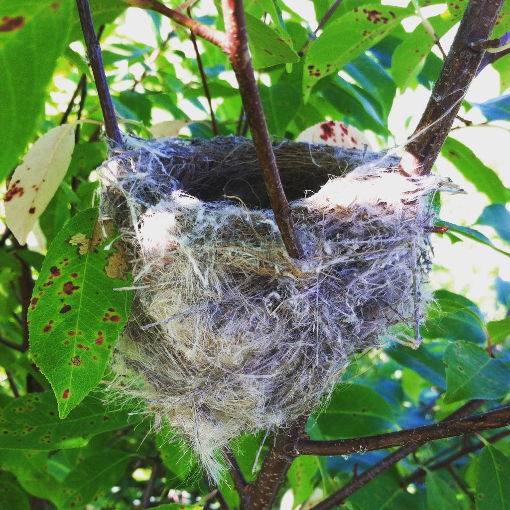 american goldfinch nest - photo #13