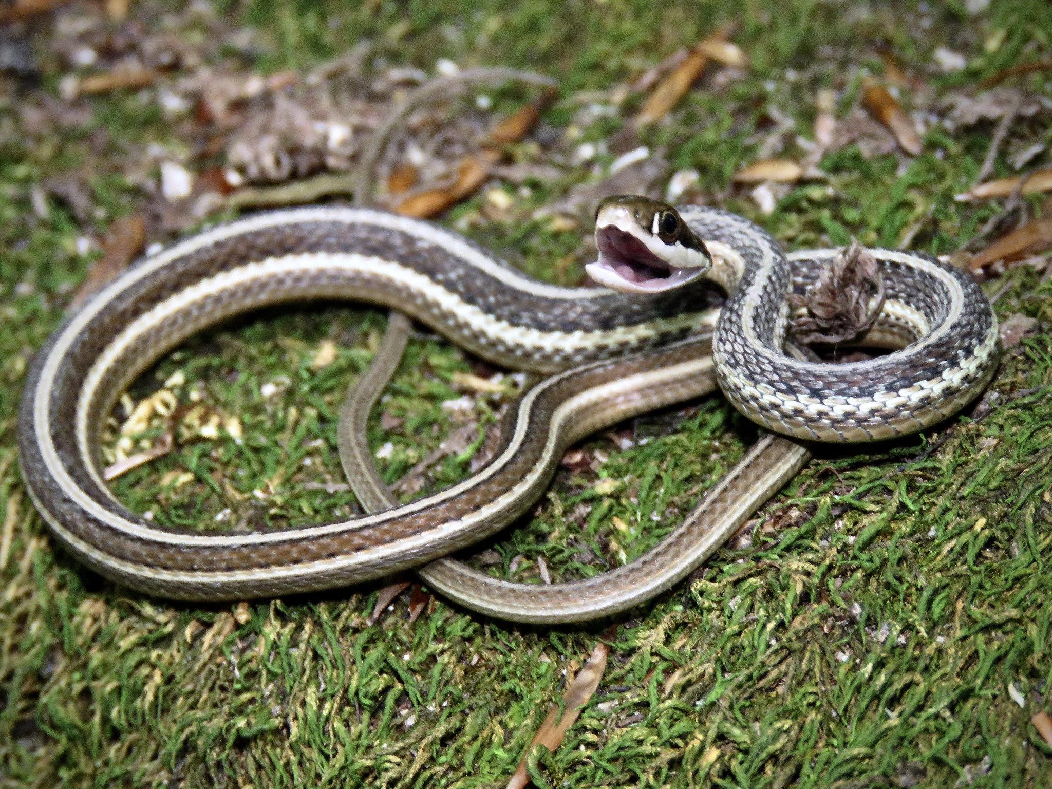 Maryland Biodiversity ...