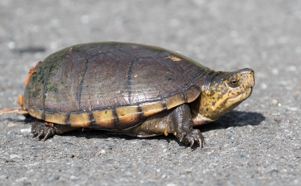 Ways Facebook Damaged My Repainted Turtle Without Me Discovering